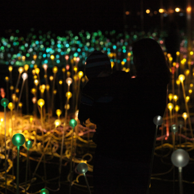 field of light albany